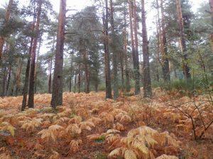 campo de helechos en otoño